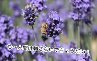 子供が虫に刺されちゃった!ハチや蚊に刺された時の対処法をご紹介!