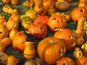 pumpkin-562409_1280