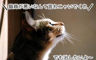子どもの猫背矯正のためにトランポリンで毎日運動!はたして猫背は治ったのか!?